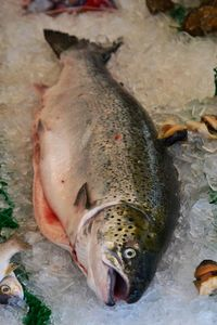 Fish, Maine Ave. Seafood Market, Washington, D.C.