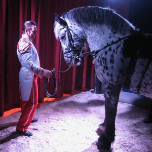 Circus - A Man and a Horse
