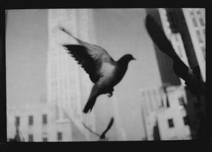 Untitled (Pigeon NY Landscape), 2018