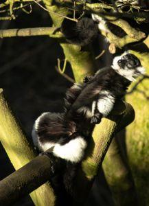 Monkey chillin'