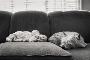Napping on the Sofa