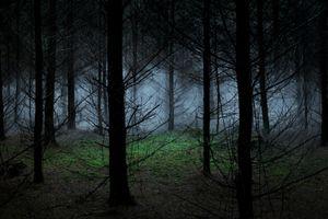 Between The Trees 8 © Ellie Davies