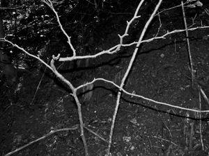 Inner Forest IV