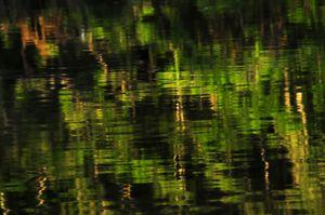 Quase verde: amazonas