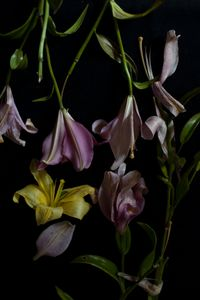 Flowery 6