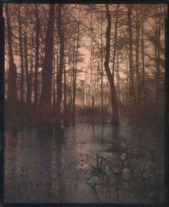 Swamp Scene