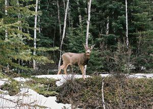 Banff National Park, Canada, 2016