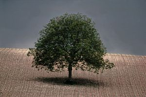 Noyer, Dordogne, Portraits of Trees