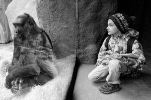 A Boy at Zoo
