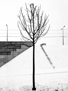 Winter forms