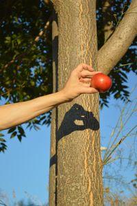 La sierpe en el Árbol del Conocimiento (integrando la sombra) - The serpent in the Tree of Knowledge (integrating the shadow) -