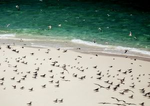 terns and their shadows