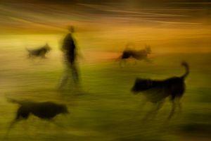 Night Park - 10 © Susan Bein