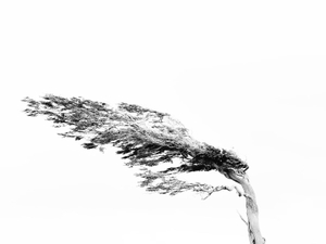 Tree from the wind