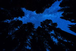 A Night Among Sequoias