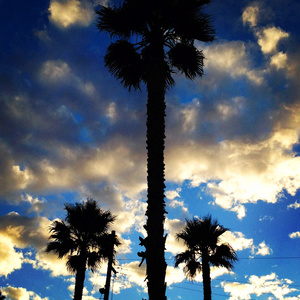 Palm tree clouds