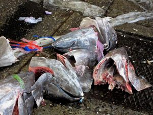 scattered remnants of fish