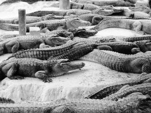 Florida Crocodile Farm, Everglades