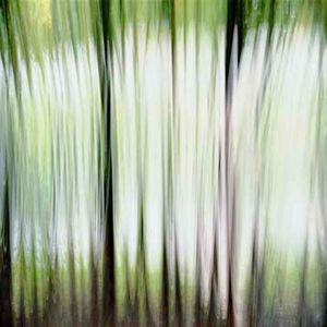 Black Bamboo 1 (vibrations) © Alfred Tom