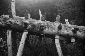 Wood spine