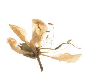 Flor 019