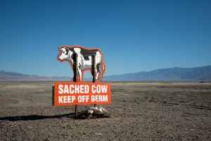 Sacred Cow, Owens Lake, CA