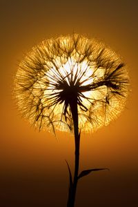 Sunset and Salsify