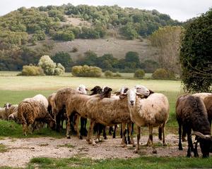 Ciociaria, Open Pasture