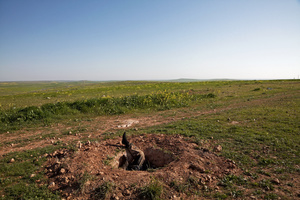 Dead body of Islamic state fighter left inside a small hole near the Eastern front of Kobane, Syria on 3 March 2015
