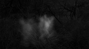 6 Captures of 1 Human (Unidentified), 2-Hour Interval, Santa Rita Mountains, AZ