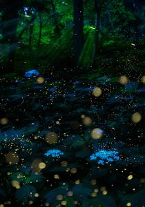 Hydrangea in summer night