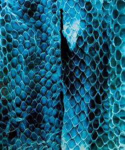 Great Plains Rat Snake, Tucson, AZ