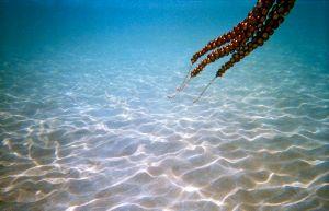 Oktopuskette/ octopus necklace