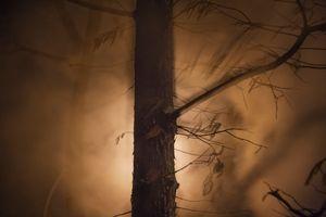 Night Trees of New York: 94 Street Steam