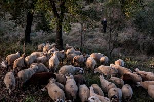 School of Shepherds