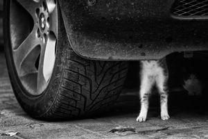 Young auto mechanic