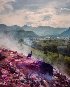 A Vulture breathes the fresh morning air, Chiapas, Mexico, 2016