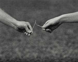 Wishbone © Allison Barnes