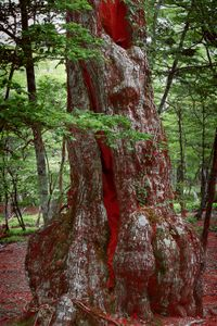 Red is inside a tree