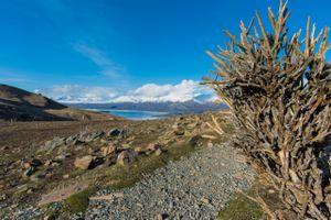 Coral Broom