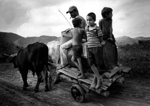 Children on oxen cart © Susan S. Bank