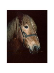 Horse with blond mane