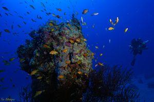50 m depth