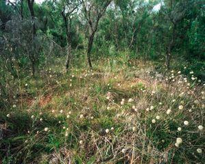 Forrestdale, Western Australia