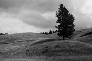 A tree near the Dolomites
