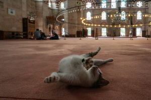 The Mosque and the cat.