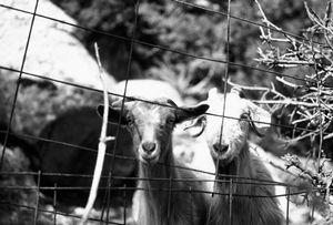 pray animals essential for their surviving ...