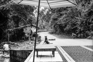 Le chien  du pont