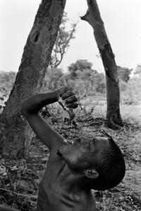 Bushman on a hunt