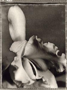 30 Cattleya percivaliana © Frazier King
